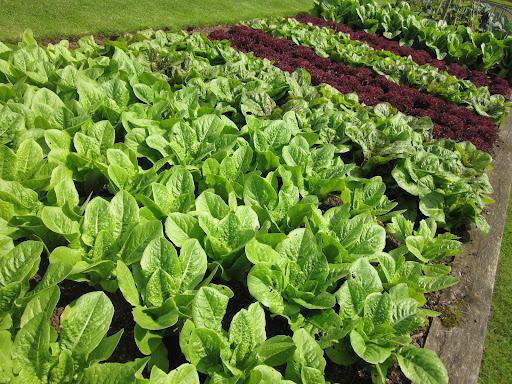 52 Week Salad Challenge