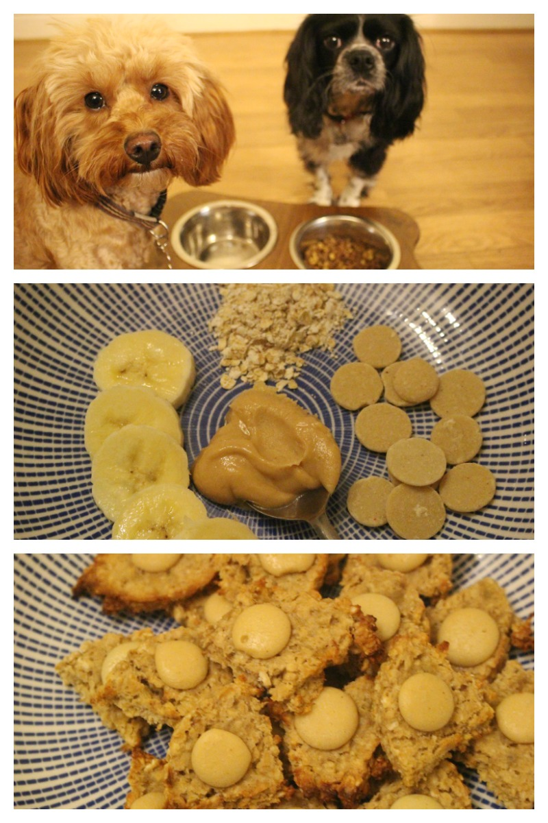 Peanut Butter and Banana Flapjack for Dogs