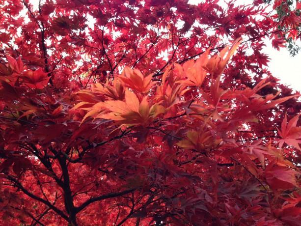 Westonbirt Arboretum autumn colour