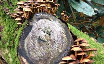 Westonbirt Arboretum Tree Stump