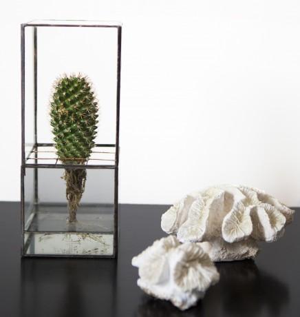 indoor plant in a black-edged terrarium