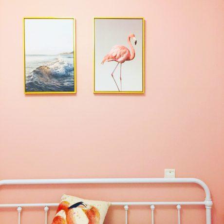 Flamingo pink wall - Dan 7th on Unsplash